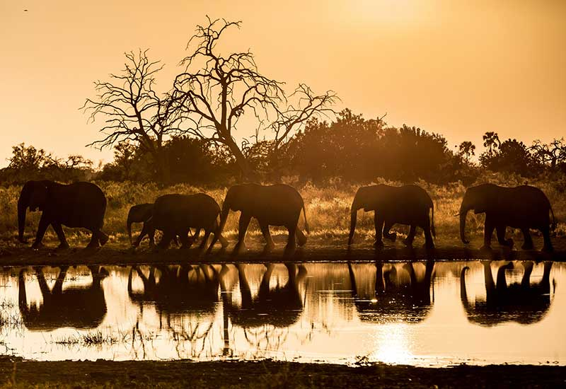 camp Qorokwe au Botswana - Wilderness Safaris